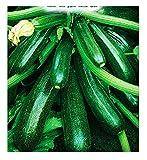 Semi di zucchino diamant hybrid - verdure - cucurbita pepo - zi015 - i migliori semi di piante - fiori - frutti rare - idea regalo originale - zucchine - 75 sementi approssimativamente - a
