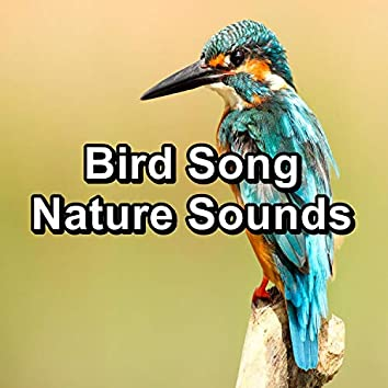 Bird Song Nature Sounds