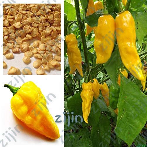 Delighted 100Pcs Carolina yellow Reaper Chili Pepper bonsai Vegetables bonsais Plants Popular Potted Planting For Home&Garden