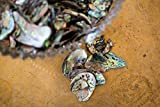 PAUA (Abalone) Shell Pieces Satin for Beach Theme Party, Wedding Decorations, DIY Crafts, Home Decorations, Fishtank Supplies, Vase Fillers (Medium 200gm)