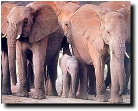 elephant poster prints