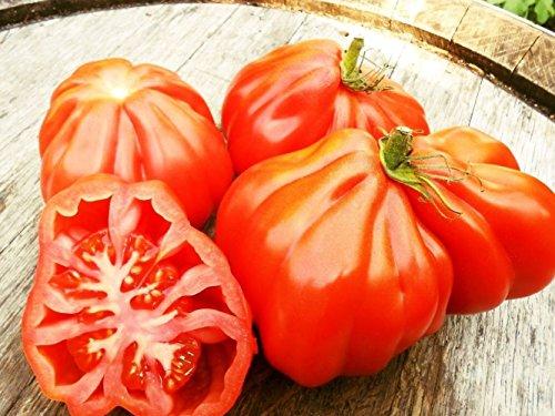 10 Samen Tomate Coeur de Boeuf, Ochsenherztomate, Oxheart Giant