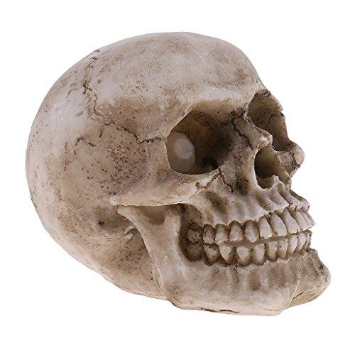 Baoblaze TOTENKÖPFE klein - Deko Figuren Schädel Totenschädel
