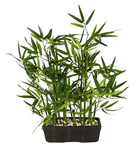 Flair Flower Künstlicher Bambus in Schale mit Deko-Steinchen Bambusgras Lemongras Kunstpflanze Pflanzen Grünpflanze Kunstblume Topfpflanze Zimmerpflanzen, grün, 41 cm