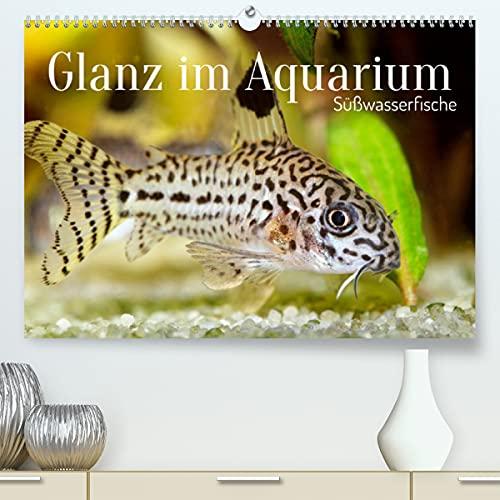 Glanz im Aquarium: Süßwasserfische (Premium-Kalender 2022 DIN A2 quer)