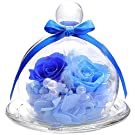 ティートサイト プリザーブドフラワー フラワーアレンジ ラッピング済み ガラスポット 2輪 (5 バラ ブルー)