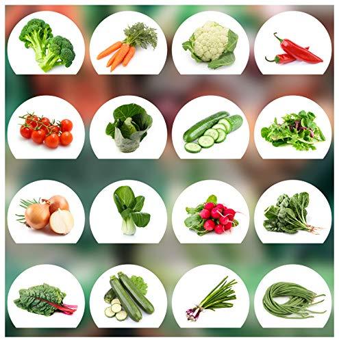Gemüse Samen Set - 16 Gemüse Sorten aus Portugal | 100{ce111c544736732e7b392bd6fc3e66fcf4a83ff1af301463b617f56d7d54e0bf} Natur Saat (Keine Chemie/künstliche Wachstums-Helfer)