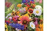 David's Garden Seeds Wildflower Butterfly Hummingbird Mix SL9863 (Multi) 500 Non-GMO, Open Pollinated Seeds