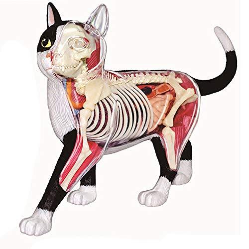 4D Gato anatómico   Desmontable Esqueleto Enseñanza Médica Puzzle Biología Montaje Animales Juguete Educación
