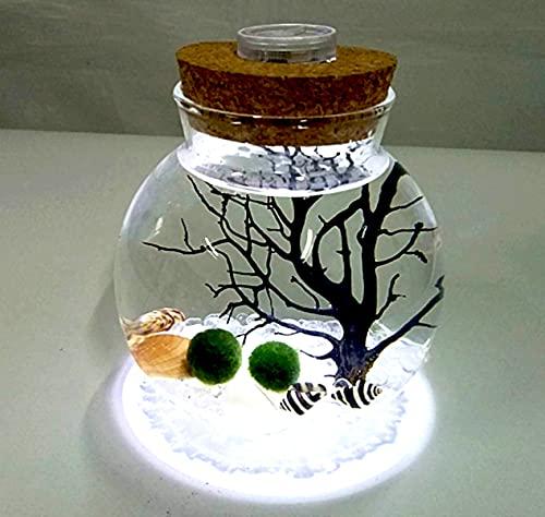 Ecosides LED Aquarium Moosball Marimo Terrarium Kit,Mikrolandschaft Deko Flasche Glas Container Jar Nachtlicht,Mit Lebenden Moosbällchen,Kieselsteinen,Muschel,Fächerkoralle (Stil 4)