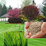 GEOPONICS 200 pcs Kor Lawn semences (Zoysia Tenuifolia) Evergreen gazon Graines de j693