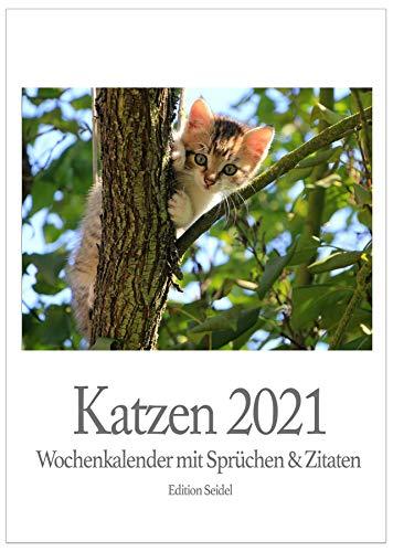 Edition Seidel Premium Katzen Wochenkalender 2021 DIN A4 Wandkalender Literarischer Kalender Literaturkalender Katzenkalender mit Sprüchen und Zitaten