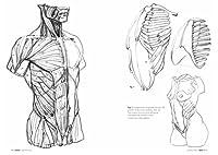 Anatomia artistica. Carnet di morfologia #5