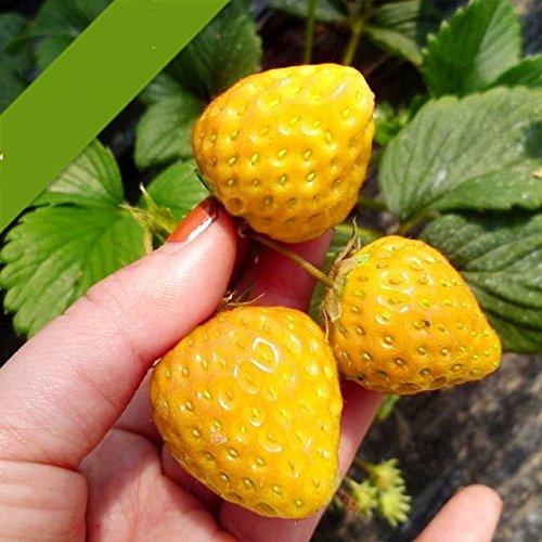 100pcs / sac 24 sortes de fraises Collection graines de fraises de fruits géant bonsaï pot non-OGM bio pour plantes de jardin à la maison 10