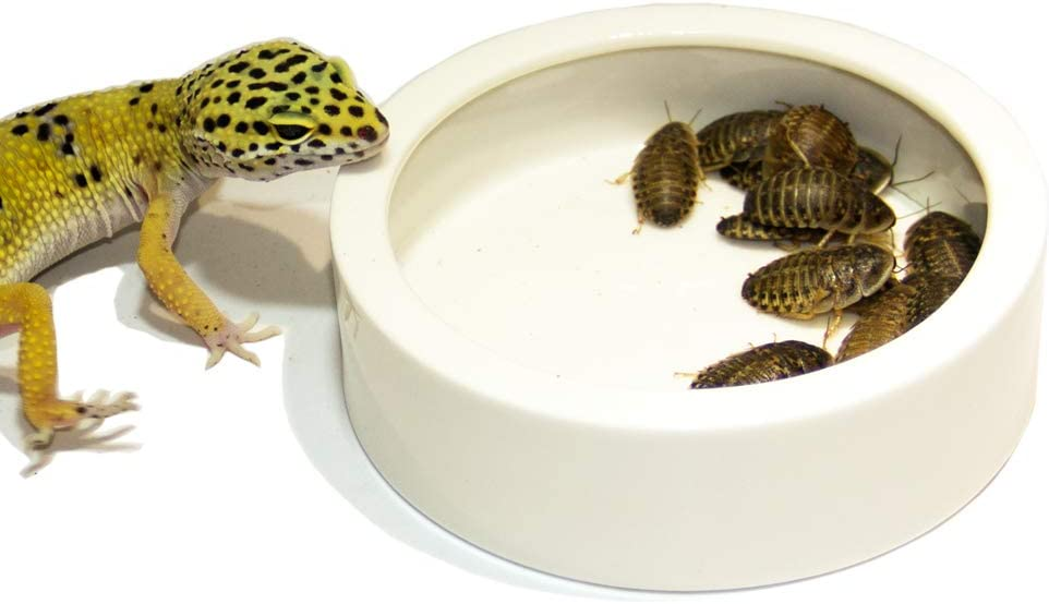 Small DC ADYOU Reptile Ceramic Food/&Water Bowl Worm//Dubia Roaches Dish Against Escaping