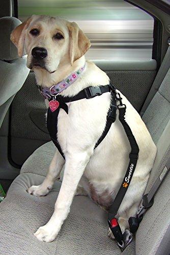 Sweetie Correa de asiento para perro y cuenco plegable para ...