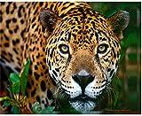 Pintura al óleo de bricolaje pintura de leopardo por números para lienzo niños adultos decoración set de regalo pintura acrílica 40x50 cm (sin marco)