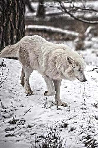 Arctic Wolf in the Snow Journal: 150 Page Lined Notebook/Diary/Journal