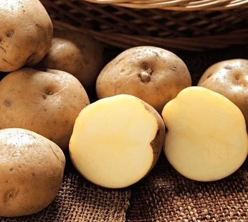 ジャガイモ・男爵薯(だんしゃくいも)の種芋 (1kg)