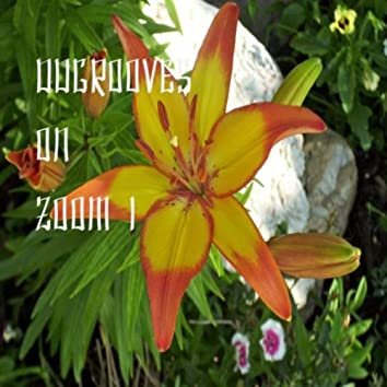 Ddgrooves On Zoom 1