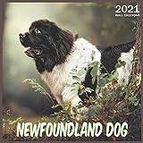 Newfoundland Dog: 2021 Wall & Office Calendar, 12 Month Calendar