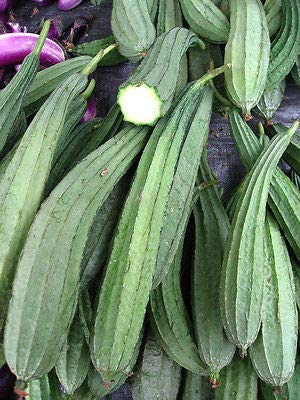 Angled Gourd 20 Seeds, Angled loofah, Ridge Gourd, Chinese Okra, Muop Khia