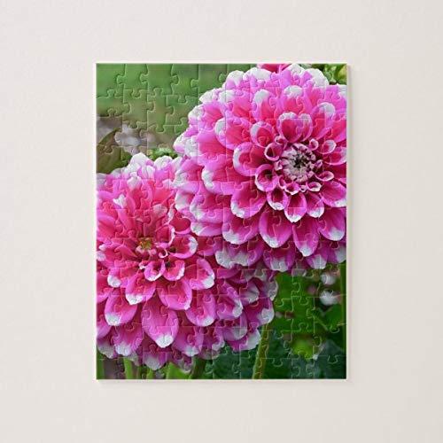 Hermoso rompecabezas de Dalias rosa en plena floración, 100