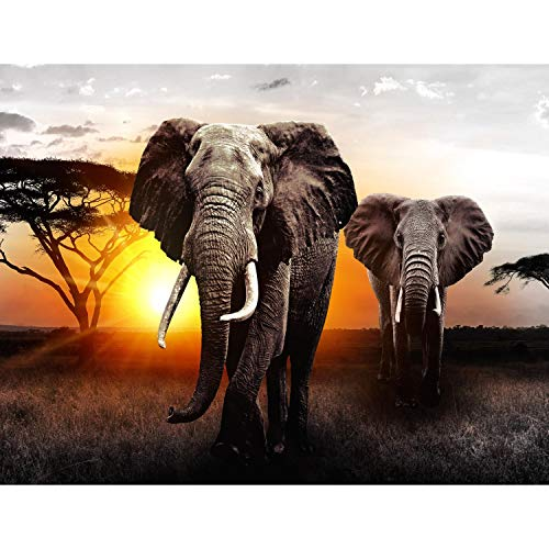 Fotobehang Afrika olifant - vliesbehang woonkamer slaapkamer kantoor hal decoratie wandschilderijen XXL moderne wanddecoratie - 100% MADE IN GERMANY - 9236aP 352 x 250 cm - 8 Bahnen A