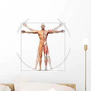 Wallmonkeys Human Anatomy Vitruvian Man Wall Decal Peel and Stick Educational Graphics (18 in H x 18 in W) WM324136