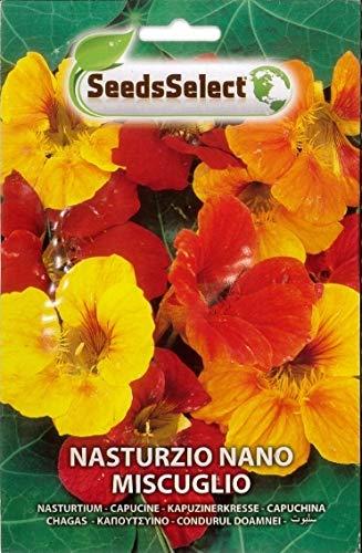 Semi Nasturzio nano miscuglio, pianta officinale,2 Buste linea maxi, Mondonatura Srl