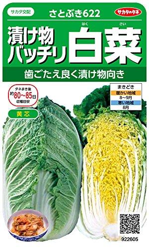 サカタのタネ 実咲野菜2605 漬け物バッチリ白菜 さとぶき622 00922605