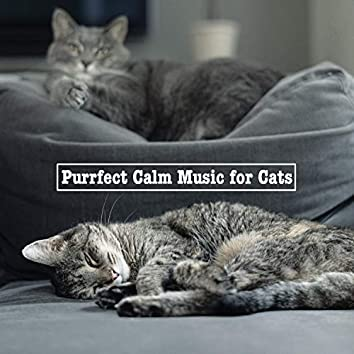 Purrfect Calm Music for Cats