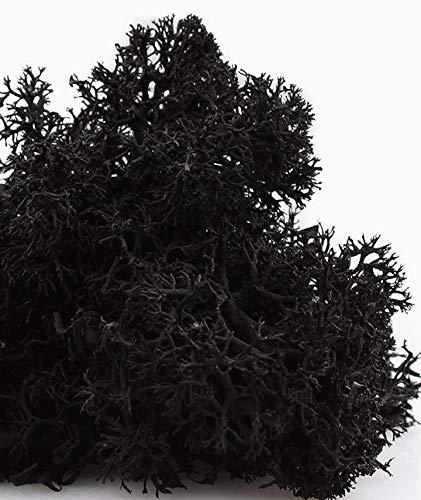 Preserved Reindeer Moss - 2 oz Bag (Black)