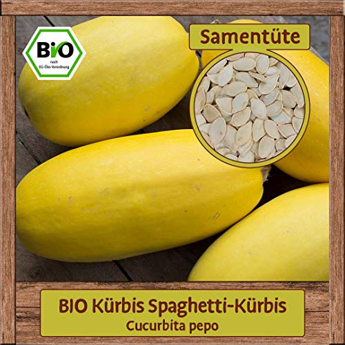 Samenliebe BIO Kürbis Spaghetti-Kürbis Cucurbita pepo Saatgut samenfest in BIO Qualität ÖKO-DE-007 reicht für ca. 7 Pflanzen