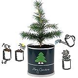 Weihnachtsbaum in der Dose – Merry Christmas Grün - 2