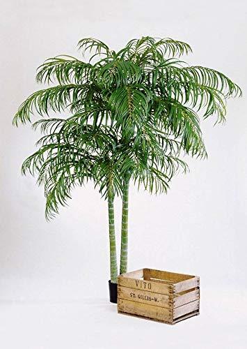 artplants.de Zestaw Sztuczna palma Arecapalme i spray ochronny UV - tworzywo sztuczne Areka Naomi, zielony, 210 cm