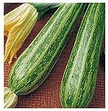 inception pro infinite 45 c.ca semi zucchino striato pugliese - cucurbita pepo in confezione originale prodotto in italia - zucchine striate pugliesi