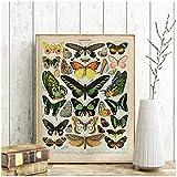 ZXYFBH Tableau Decoration Murale Encyclopédie Vintage Affiches Impressions Papillon Fleurs Insectes Toile Peintures Mur Art Photo Décor À La Maison Cuadros 15.7x23.6in (40x60cm) x1pcs No Frame