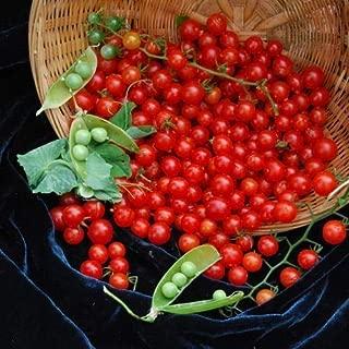 Matt's Wild Cherry Tomato Seeds (40 Seed Pack)