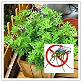 Kucus 100pcs - Mosquito Repelling Grass Mozzie Buster...