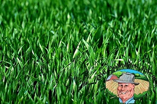 Premium Winter Rye Limited time for free shipping Grass Seeds Crop Indianapolis Mall 10 Non-GMO lbs Cover