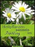 51R7l83a eL. SL160  - Phytotherapie mit der Angelika Heilpflanze