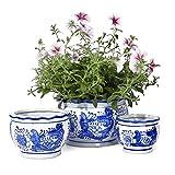 Potey Ceramic Plant Pots