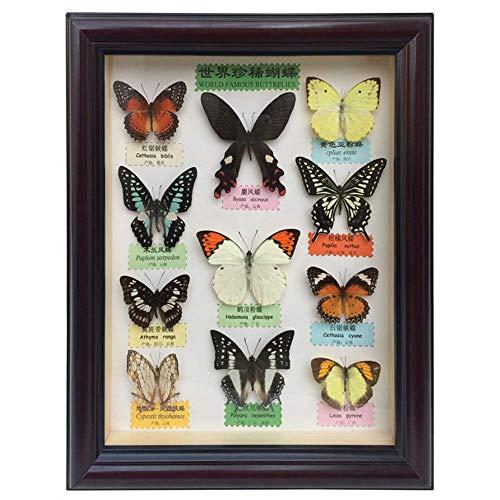 (Powder Top) True Butterfly Espécimen Artesanía, Dormitorio, Sala de Estar, Oficina, Decoración, Marco de Fotos de Insectos, Joyería de Pintura Decorativa
