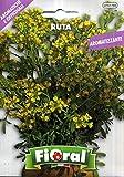 Sementi di piante aromatiche e officinali in bustina ad uso amatoriale (RUTA)