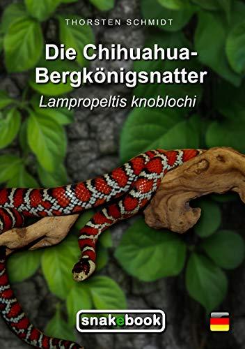 Die Chihuahua-Bergkönigsnatter: Lampropeltis knoblochi (SNAKEBOOK)