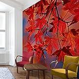 Apalis Vliestapete Red Maple Fototapete Quadrat | Vlies Tapete Wandtapete Wandbild Foto 3D Fototapete für Schlafzimmer Wohnzimmer Küche | Größe: 288x288 cm, rot, 97946