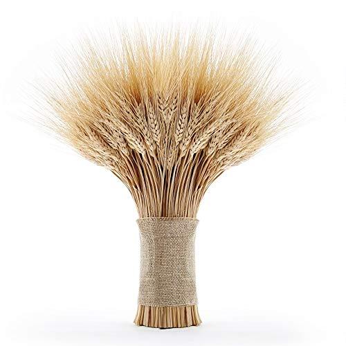 EOSAGA Golden Dried Wheat Sheaves 120 Stems Bundle Premium Autumn Arrangements Full Wholesale DIY Home Table Wedding Xmas