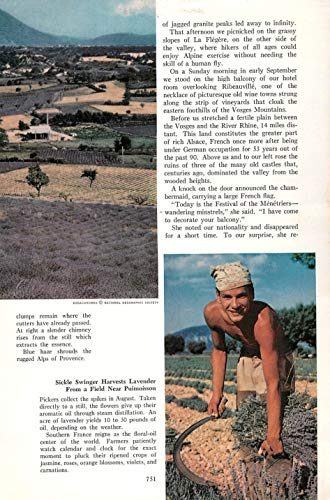 Print Ad 1960 Sickle Swinger harvests Lavender from a Field Near puimoisson