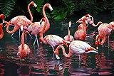 TRENDECOR - Cuadros Impresión Digital - Fotografía Flamencos sobre Cristal Templado (120x80)